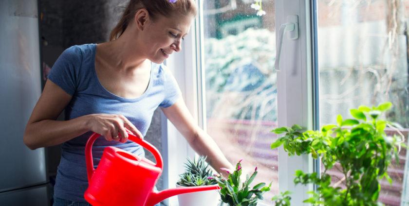 Care sunt cele mai utile plante de casa?